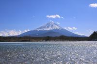 山梨県 冬の富士山と風で煌めく精進湖