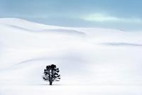 アメリカ合衆国 一面の雪景色 冬