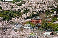 祐徳稲荷神社(外苑東山より望む)