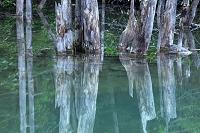 北海道 ブルー沼の写り込み 美瑛