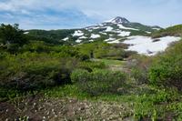 秋田県 由利本庄市 ミズバショウと残雪と新緑の鳥海山