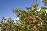 青森県 弘前市立 リンゴ公園