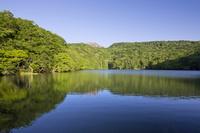 青森県 新緑生い茂る蔦沼