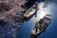 福岡県 柳川川下りと桜