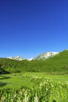 長野県 栂池自然園わたすげ湿原と白馬三山