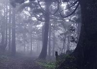 新潟県 原生林