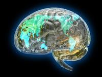 株価係数と脳