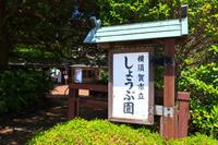 神奈川県 横須賀しょうぶ園