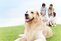 伏せている犬と日本人家族