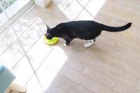 窓辺で水を飲む猫