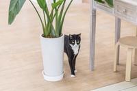 植木鉢の側の猫