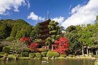 山口県 瑠璃光寺の五重塔と紅葉