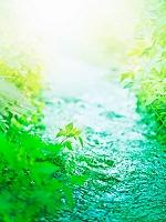 若葉と渓流