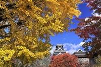 熊本県 熊本城とイチョウ