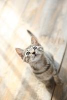 日差しを浴びる子猫