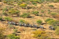 南スーダン アフリカゾウの群れ