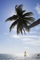 ベトナム ヤシの木とウィンドサーフィン