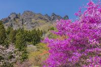 群馬県 ツツジ咲くさくらの里