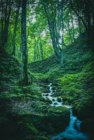 青森県 草木の間を下る沢水