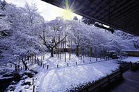 京都府 雪景色の常照皇寺 庭園 朝景 光芒