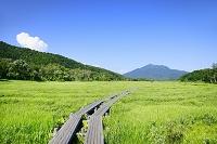 群馬県 上田代から望む燧ヶ岳と木道