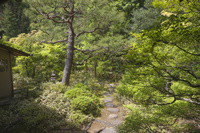 京都府 高桐院(大徳寺塔頭) 新緑