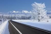 北海道 樹氷の道と旭岳
