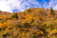 富山県 飛越峡の紅葉