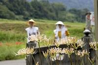 香川県 四国霊場第67番 大興寺 白い彼岸花とお遍路さん