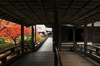 山梨県 恵林寺本堂庭園の紅葉