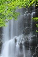 大阪府 新緑の箕面の滝
