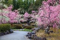 京都市 城南宮 春の山