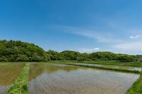 北海道の水田
