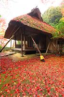 京都府 金福寺 芭蕉庵と散り紅葉
