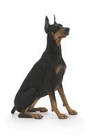 従順そうにお座りしている犬