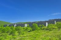 岩手県 新緑の松尾鉱山跡