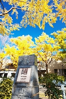 神奈川県 日本の道100選