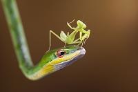 蛇とカマキリ