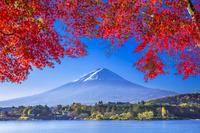 山梨県 富士山と河口湖の紅葉