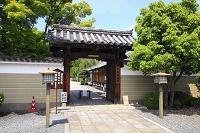 京都府 千本釈迦堂 新緑の参道