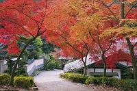 福岡県 紅葉の秋月城跡