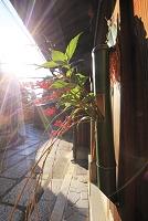 京都府 祇園 正月飾りされた石塀小路の町並み