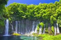 日本 静岡県 新緑の白糸の滝
