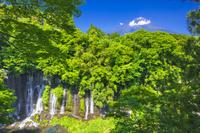 静岡県 新緑の白糸の滝と富士山