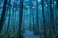 長野県 苔の森と原生林