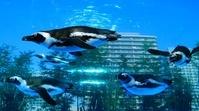 ビル街を泳ぐペンギン サンシャイン水族館