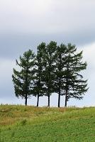 北海道 5本の木