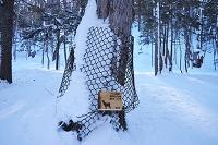 北海道 阿寒湖付近 シカの食害防止ネット