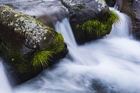 山梨県 吐竜の滝にて