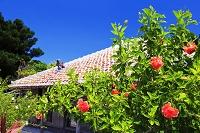 沖縄県 夏の竹富島の民家とハイビスカス
